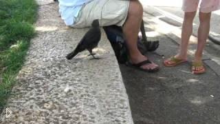 Смотреть онлайн Умная птичка прилетела к людям за помощью