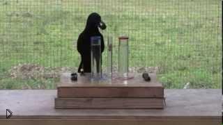 Смотреть онлайн Ворона понимает свойства воды