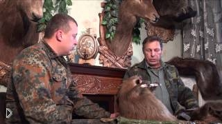Смотреть онлайн Охота на речного бобра с ружьем