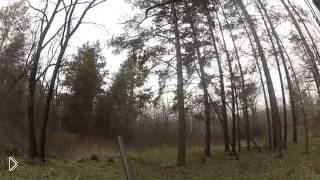 Смотреть онлайн Охота на косулю загоном