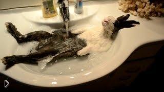 Смотреть онлайн Кролик обожает принимать теплую ванну