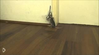 Смотреть онлайн Мышонок просит свою хозяйку открыть дверь