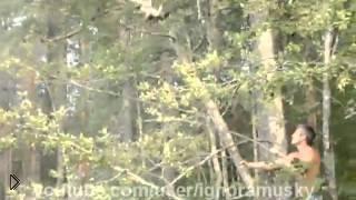 Сомнительное спасение котика - Видео онлайн