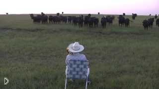 Смотреть онлайн Коровы идут к пастуху на звук тромбона