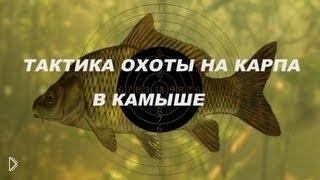 Смотреть онлайн Особенности подводной рыбалки в речных камышах