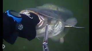 Смотреть онлайн Подводная охота на огромного агрессивного сома
