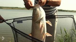 Смотреть онлайн Секреты рыбалки на толстолоба