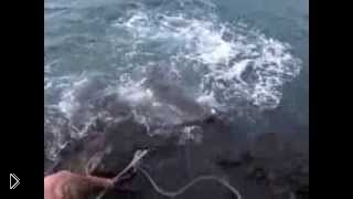 Смотреть онлайн Парень пытается выловить тигровую акулу