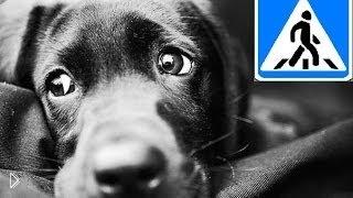 Смотреть онлайн Подборка: Водители пропускают собак на дороге