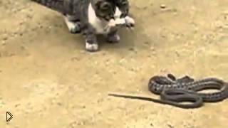 Смотреть онлайн Кот победил бой с коброй