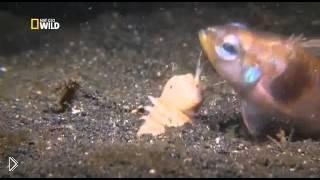 Жители океана: пурпурный австралийский червь - Видео онлайн
