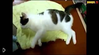 Кот гангстер видит сны - Видео онлайн