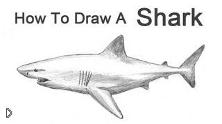 Смотреть онлайн Как легко нарисовать акулу карандашом поэтапно