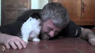 Смотреть онлайн Знакомство щенка с хозяином - милота