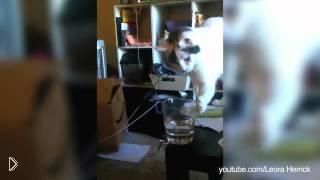 Смотреть онлайн Подборка котов, которые любят все ронять на пол