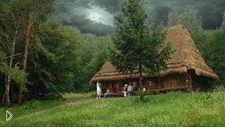 Смотреть онлайн Документальный фильм «Жизнь в дикой природе»