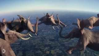 Смотреть онлайн Оказывается слоны умеют летать и прыгать на батуте...