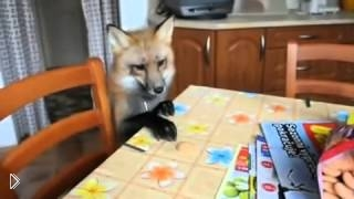 Смотреть онлайн Самая милая на свете домашняя лиса
