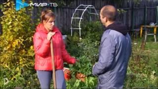 Современный огород без химикатов - Видео онлайн