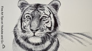 Смотреть онлайн Как поэтапно нарисовать красивого тигра