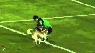 Смотреть онлайн Собака выбежала на поле и издевается над людьми