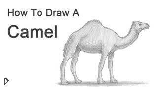 Как поэтапно рисовать карандашом верблюда - Видео онлайн