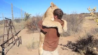 Смотреть онлайн Безграничная любовь дикой кошки