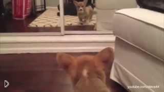 Смотреть онлайн Как забавные животные реагируют на зеркало