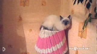 Смотреть онлайн Кот застрял в настольном торшере