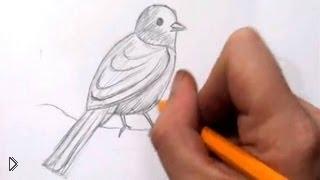 Смотреть онлайн Как правильно рисовать птиц карандашом
