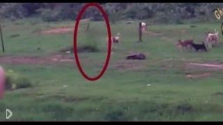 Смотреть онлайн Реальный призрак пробежал мимо собак