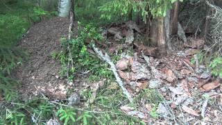 Смотреть онлайн Из чего разжечь костер в лесу