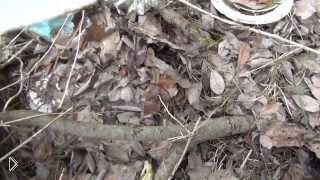 Смотреть онлайн Делаем шалаш из веток в лесу