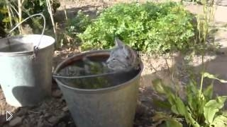 Смотреть онлайн Кошка которая любит расслабиться в ведре с водой
