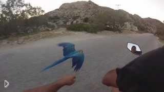 Смотреть онлайн С попугаем ара наперегонки на мотоцикле