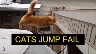 Смотреть онлайн Подборка: Неудачные прыжки котов