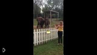 Смотреть онлайн Слоны танцуют под живую музыку скрипки