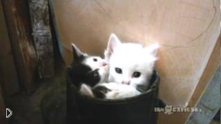 Смотреть онлайн Три голубоглазых котенка делают потягушки