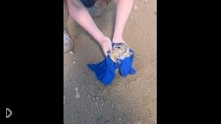 Смотреть онлайн Ребята спасли суслика на дороге - толстяк застрял в норе