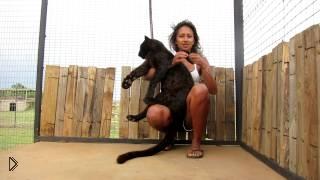 Смотреть онлайн Черный леопард ну очень скучал по хозяйке