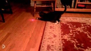 Смотреть онлайн Кот с лазером на голове гоняется за красной точкой