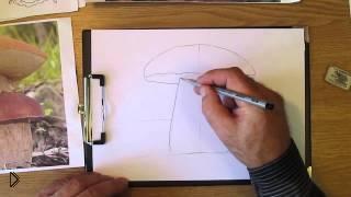 Смотреть онлайн Как нарисовать белый гриб карандашом поэтапно