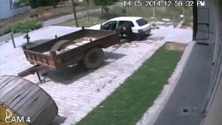 Смотреть онлайн Воры увезли корову на машине