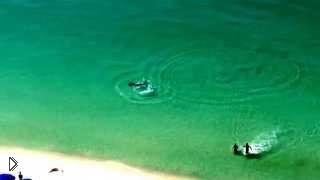 Смотреть онлайн Огромная акула чудом не напала на людей