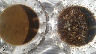 Смотреть онлайн Как самостоятельно определить кислотность почвы