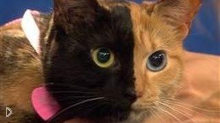 Смотреть онлайн Невероятная история двуликой кошки