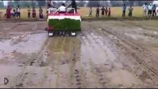 Смотреть онлайн Как засеивают рисовые поля в Непале