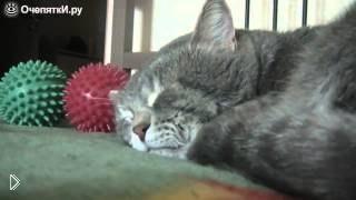 Смотреть онлайн Спящий кот реагирует на кашель хозяина