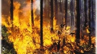 Смотреть онлайн Один из самых больших лесных пожаров в США