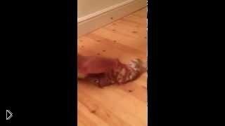 Смотреть онлайн Кошачий керлинг: котик любит кататься по полу